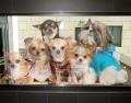 Новые 3D-стикеры со всеми породами собак,кошек,животных для стен,окон,дверей, авто