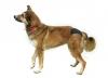 Защитные трусики для собак