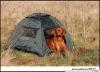 Выставочная палатка для собак Doggy