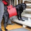 Поддерживающая шлейка для собак