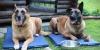 Охлажнающе-восстанавливающие матрасы для собак